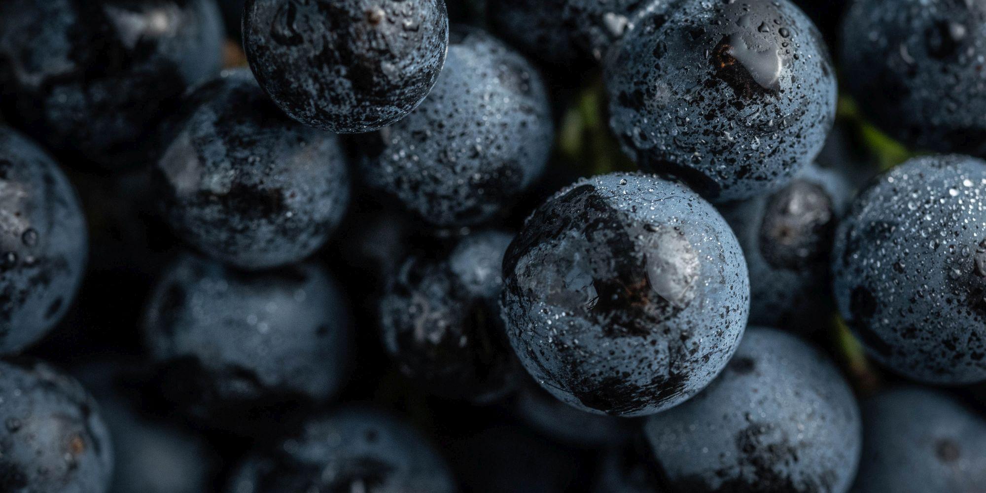 Kékszőlő-fajták, vörösbor-stílusok