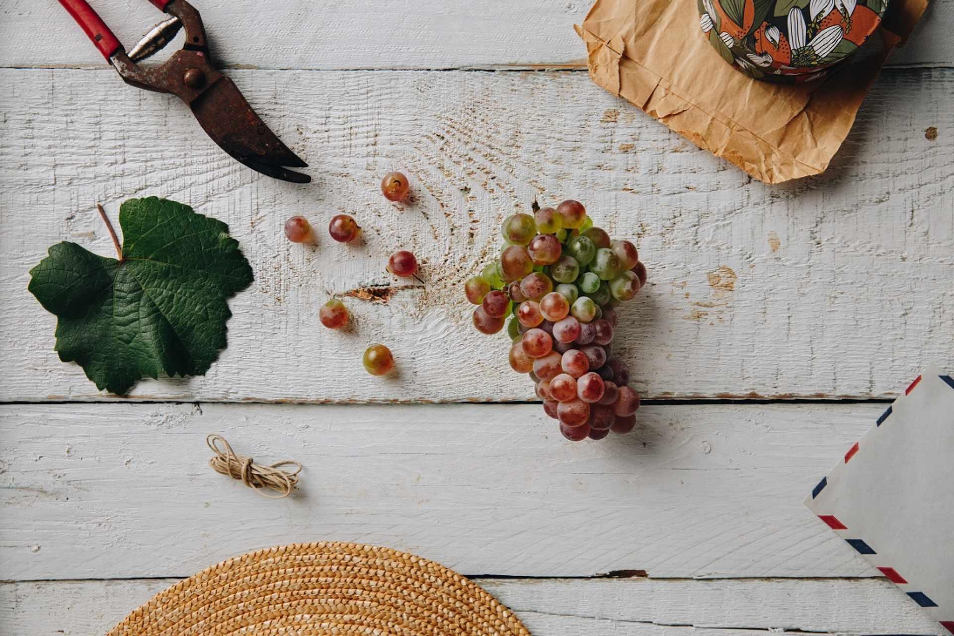 Kövidinka szőlőfajta