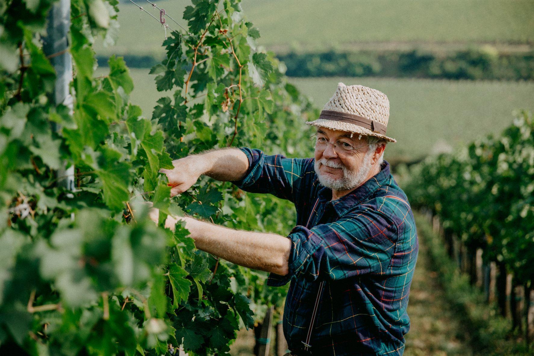 Mit csinál a borász nyáron?