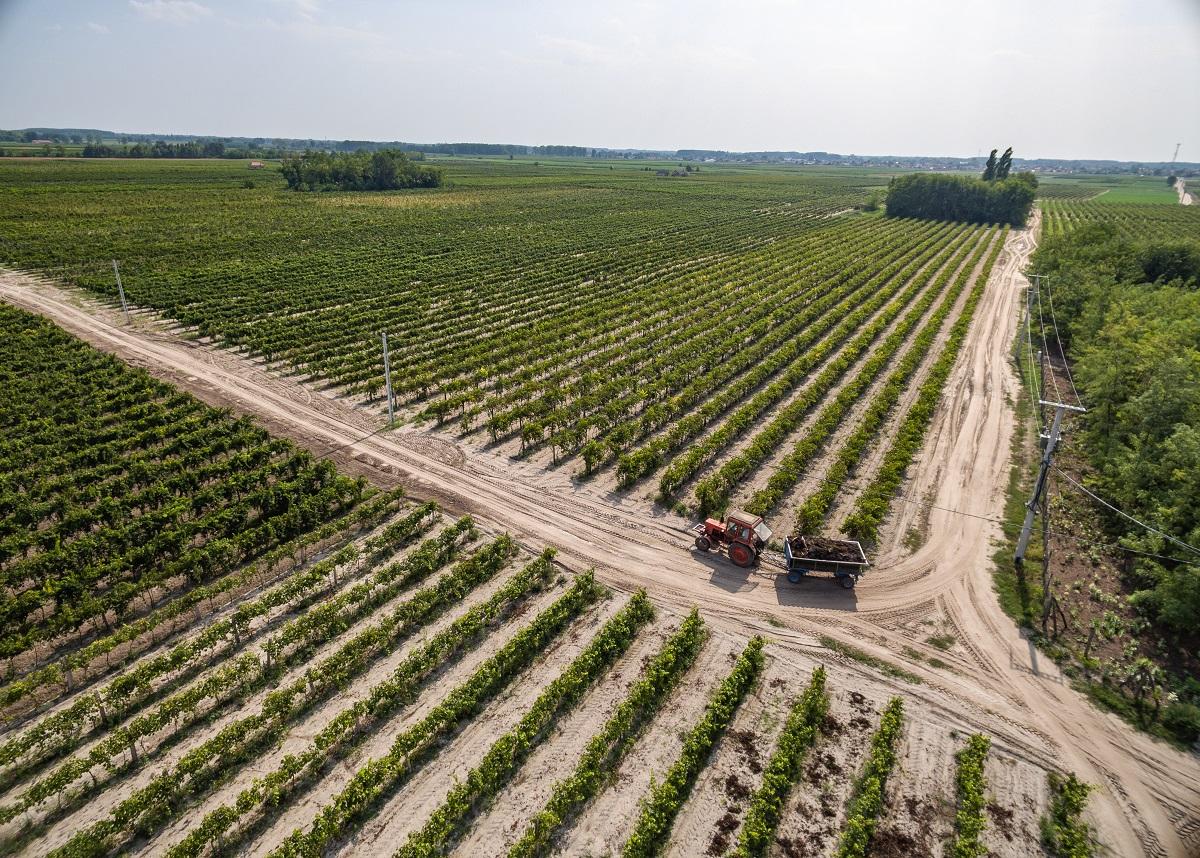 Kunság Wine District: home of award-winning rosés and many hidden treasures