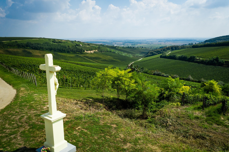 Villányi szőlőültetvény/Villányi borvidék